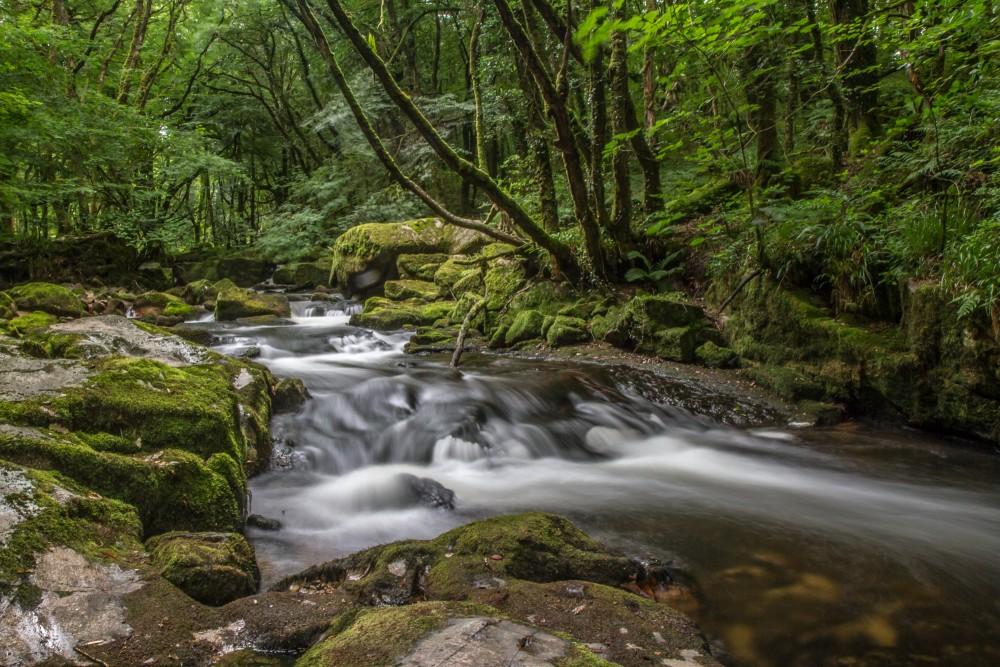 Golitha Falls 2 S Tolfrey