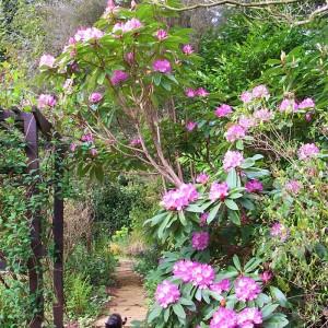 Moyclare Garden 2